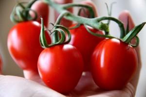 Fragrant Tomato Stems