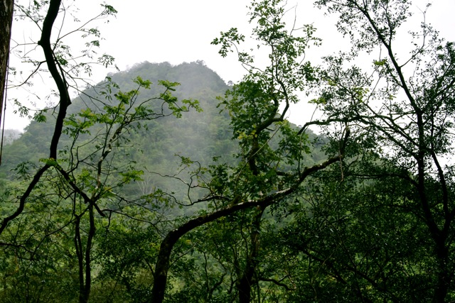 Manoa Falls Rainforest