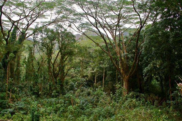 Manoa Trail Entrance