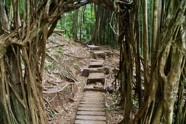Manoa Trail Steps