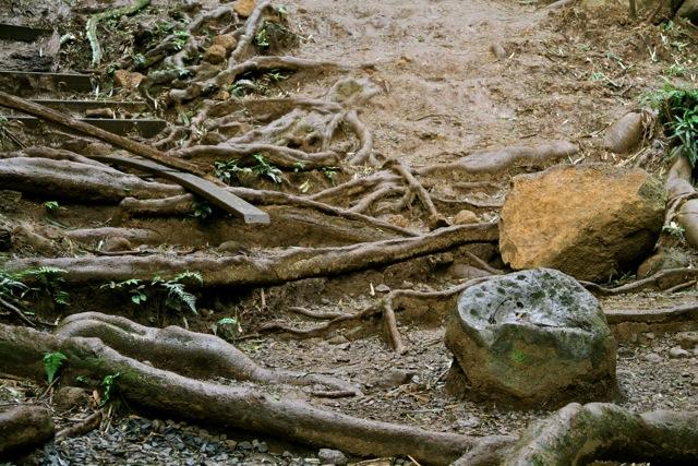 Tricky Manoa Trail