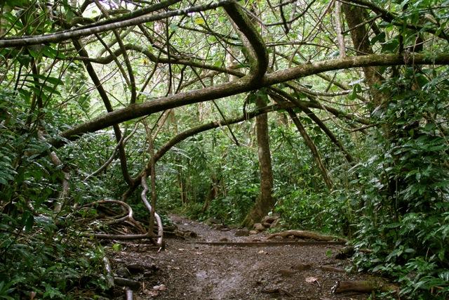 Viney Manoa Trail