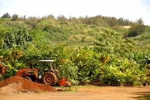 Hawaiian Farm