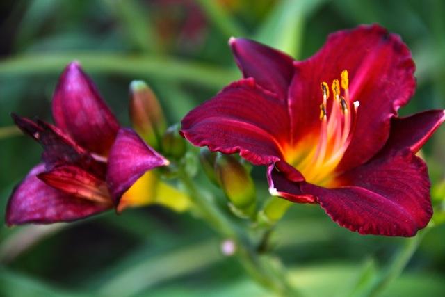 Flamey Flowers