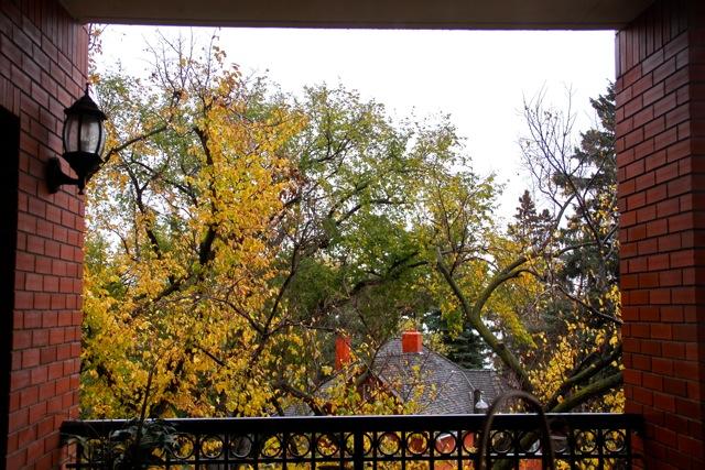 Gloomy Fall Day