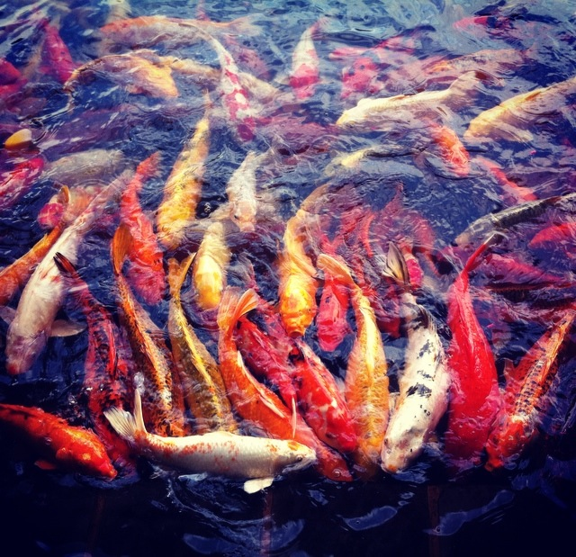 Feeding the Fishies