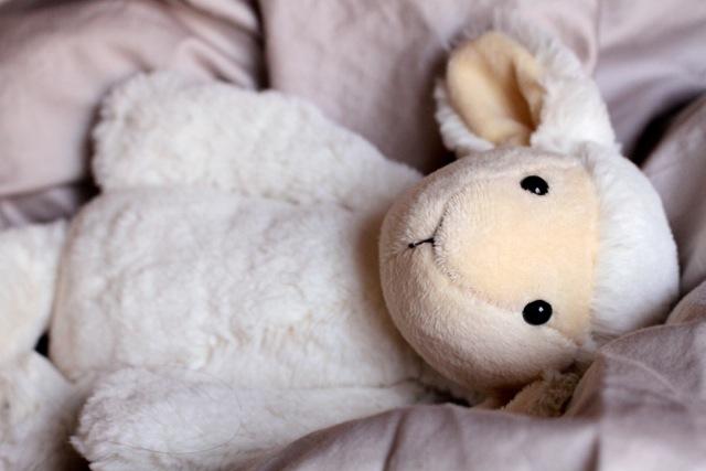 Sheep Teddy