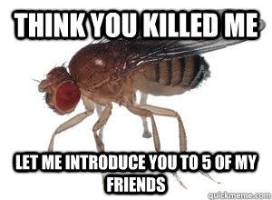 Fruit Fly War