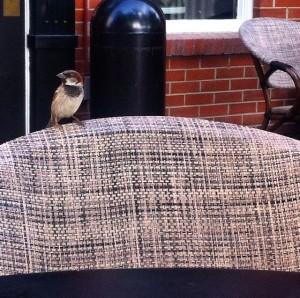 Starbucks Sparrow2