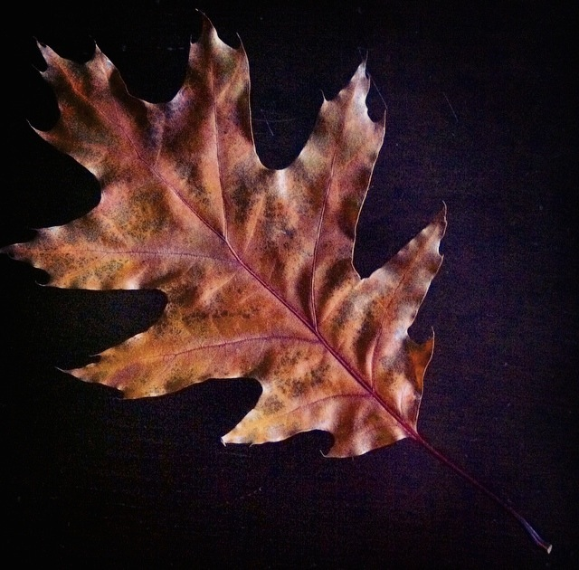 Gorgeous Fall Leaf