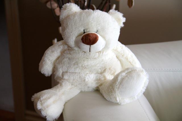 Webster Bear