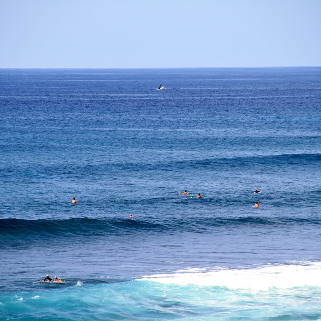 Whales in Maui2