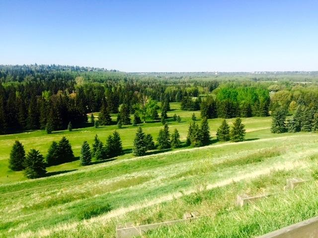 Pretty Edmonton2