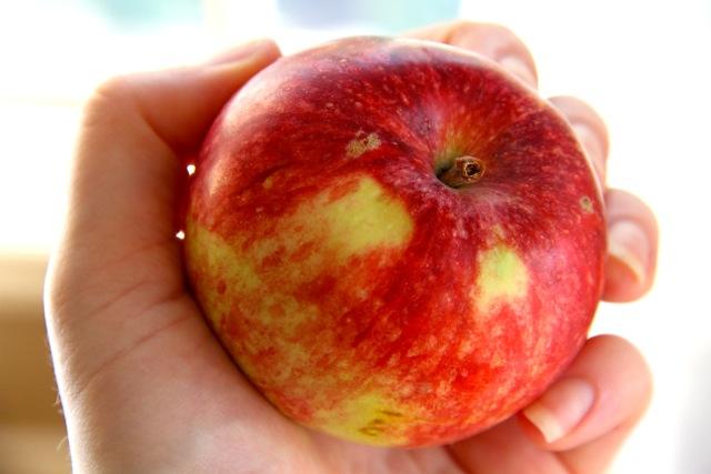 Orchard Apple