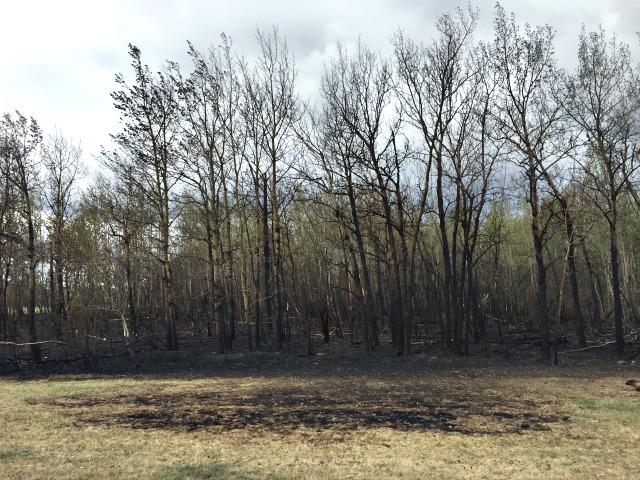 Burnt Woods