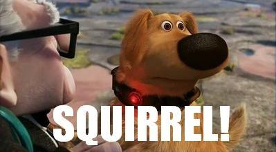 Squirrel Dug