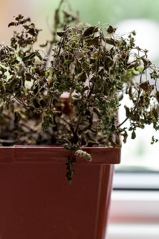 Dead Herbs