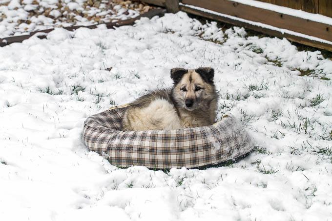 Snowy Ky