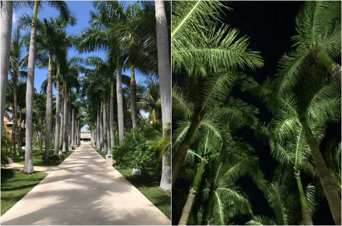 Lots of Palm Trees