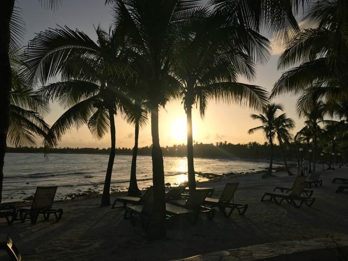 Palm Trees on the Beach3